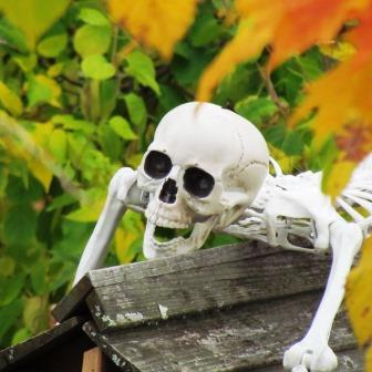 Halloween Law